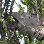 Зверь, пожирающий дерево